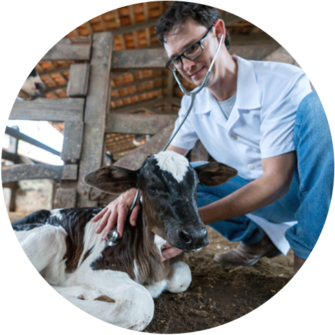 Best Animal Jobs | Who Is Hiring For Jobs With Animals?