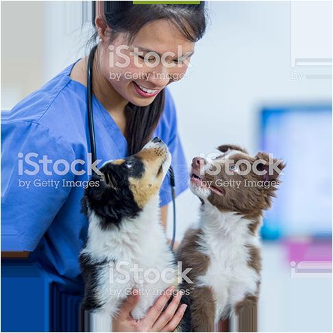 Best Jobs With Animals